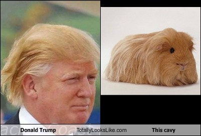 donald trump hair meme the scare that is donald trump s hair carolinagirlantics